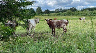 Hillview-Farmstay